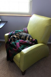 New comfy chair, quickly claimed by my cat